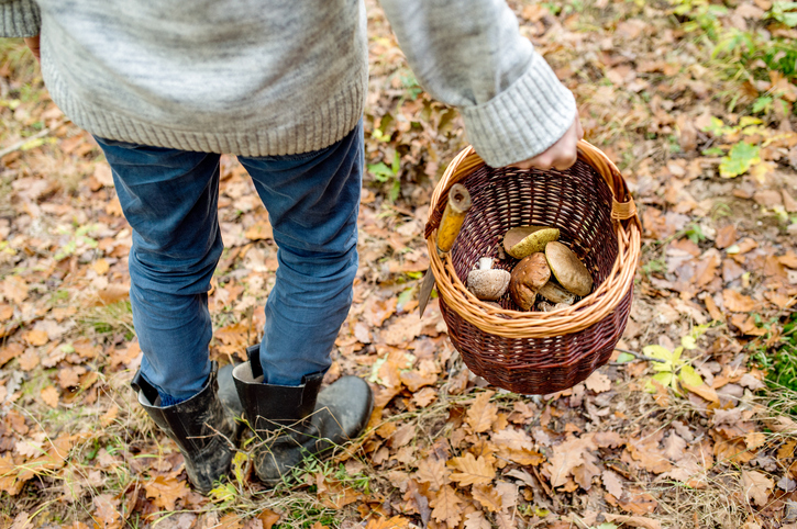 Unrecognizable Man Holding Basket With Mushooms, Autumn Forest